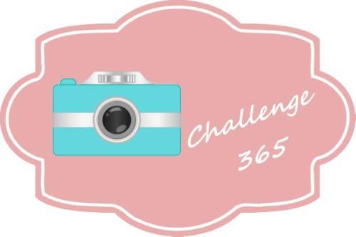 photo365 challenge picture